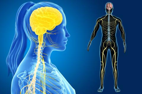 Patients may one day be able to control symptoms related to nerve disorders wirelessly. (Credit: Shutterstock)