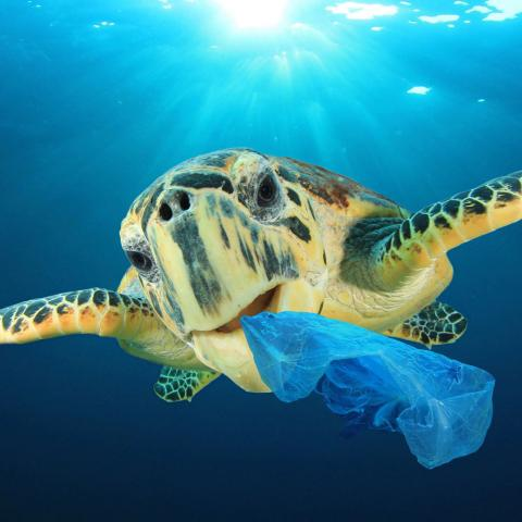 Draper is addressing the rising tide of plastic in the world's oceans in a program funded in part by the Wallace Research Foundation. (Credit: Shutterstock.)